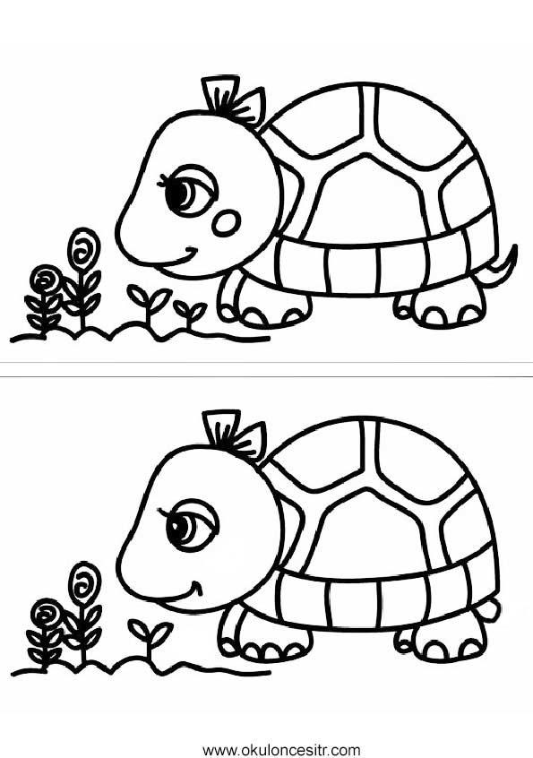 Kaplumbağa Aradaki Farkı Bul Sayfası