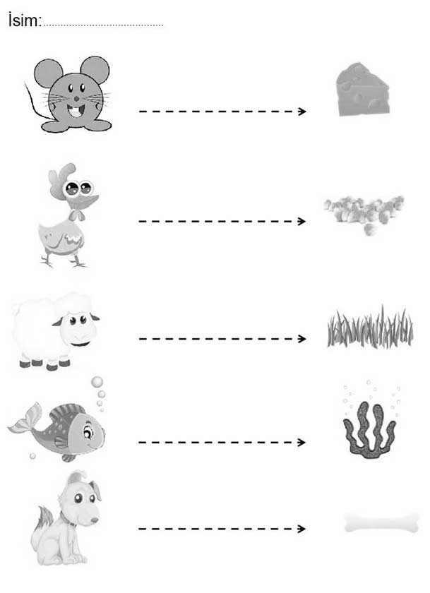 Duz Cizgi Calisma Sayfasi Okuloncesitr Preschool