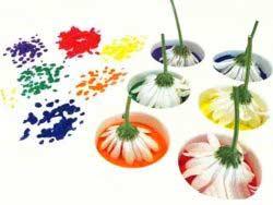 Çiçek Baskısı