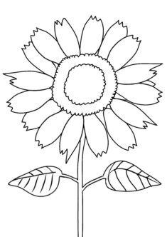 aycicegi11-boyama-sayfasi