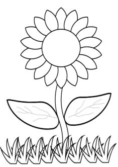 aycicegi15-boyama-sayfasi