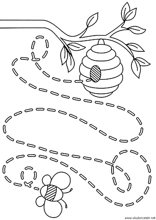 Arı Çizgi Çalışması
