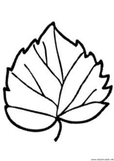 yaprak-kalibi-(11)