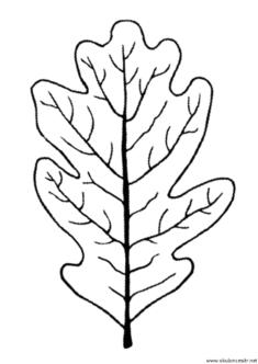 yaprak-kalibi-(12)
