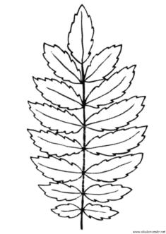 yaprak-kalibi-(13)