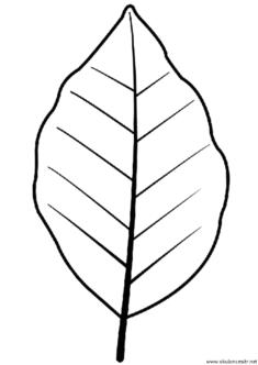 yaprak-kalibi-(4)