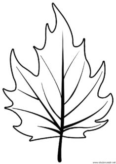 yaprak-kalibi-(5)