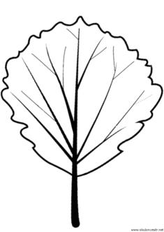 yaprak-kalibi-(6)