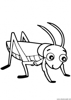 cekirge-boyama-grasshopper-coloring-page (1)