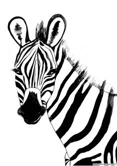 zebra-kalibi